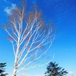 【岐阜・ほおのき平】自然風景ギャラリー「春夏秋冬」