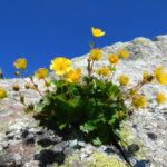【立山】自然風景ギャラリー「春夏秋冬」